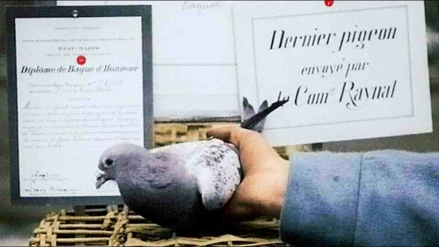 PIGEONS, WORLD WAR I HEROES . One WWI pigeon received the Legion of Honour RING